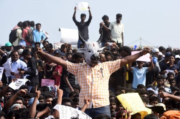 Many in Tamil Nadu been  protesting against the ban on Jallikattu by the Supreme Court of India.