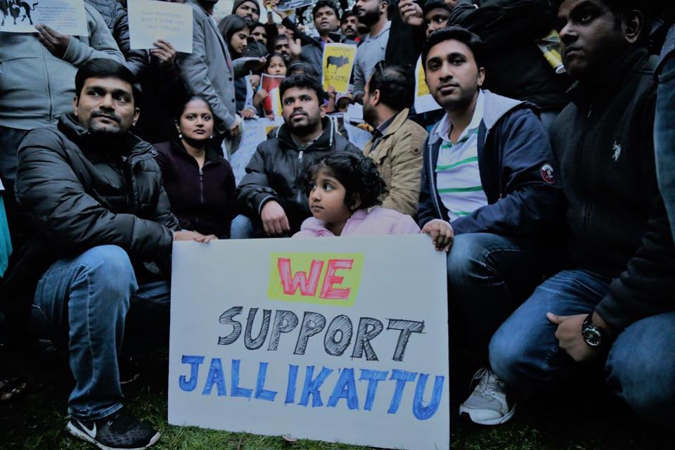 Many Tamil-Americans held a rally in the US, in support of the ongoing Jallikattu movement.