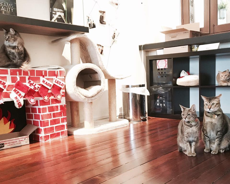 Photo courtesy: Company of Cats Facebook