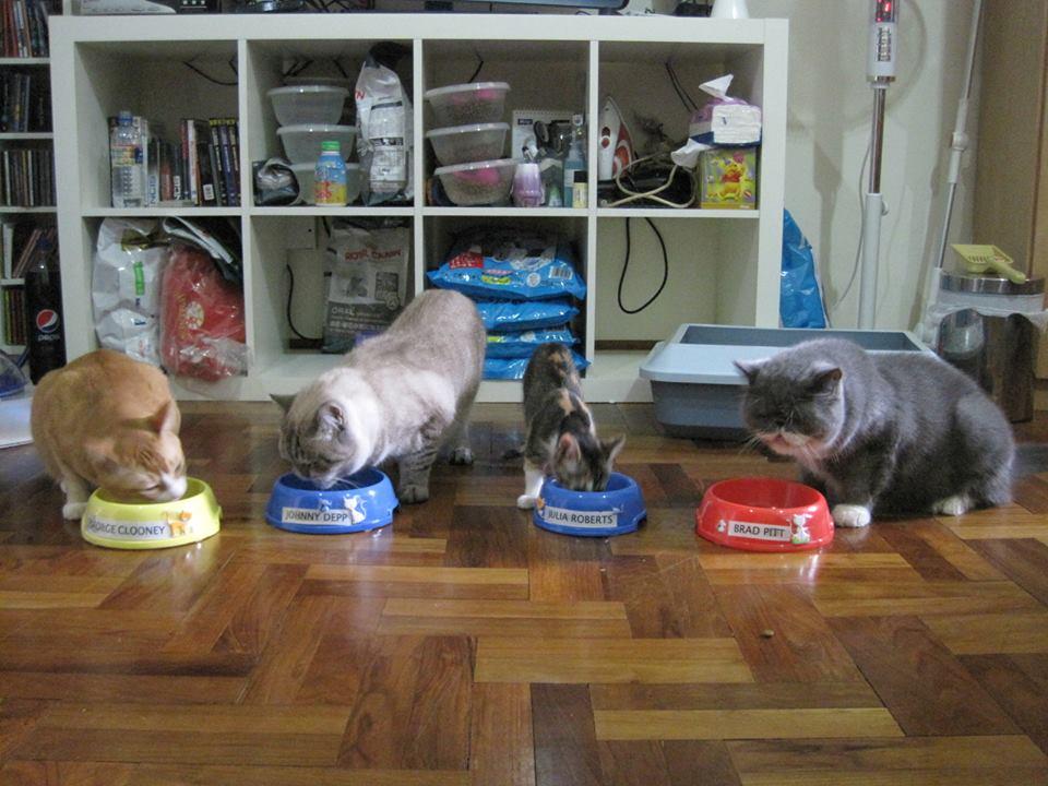 Dinnertime for the superstars. Photo courtesy: Lion City Kitty Facebook