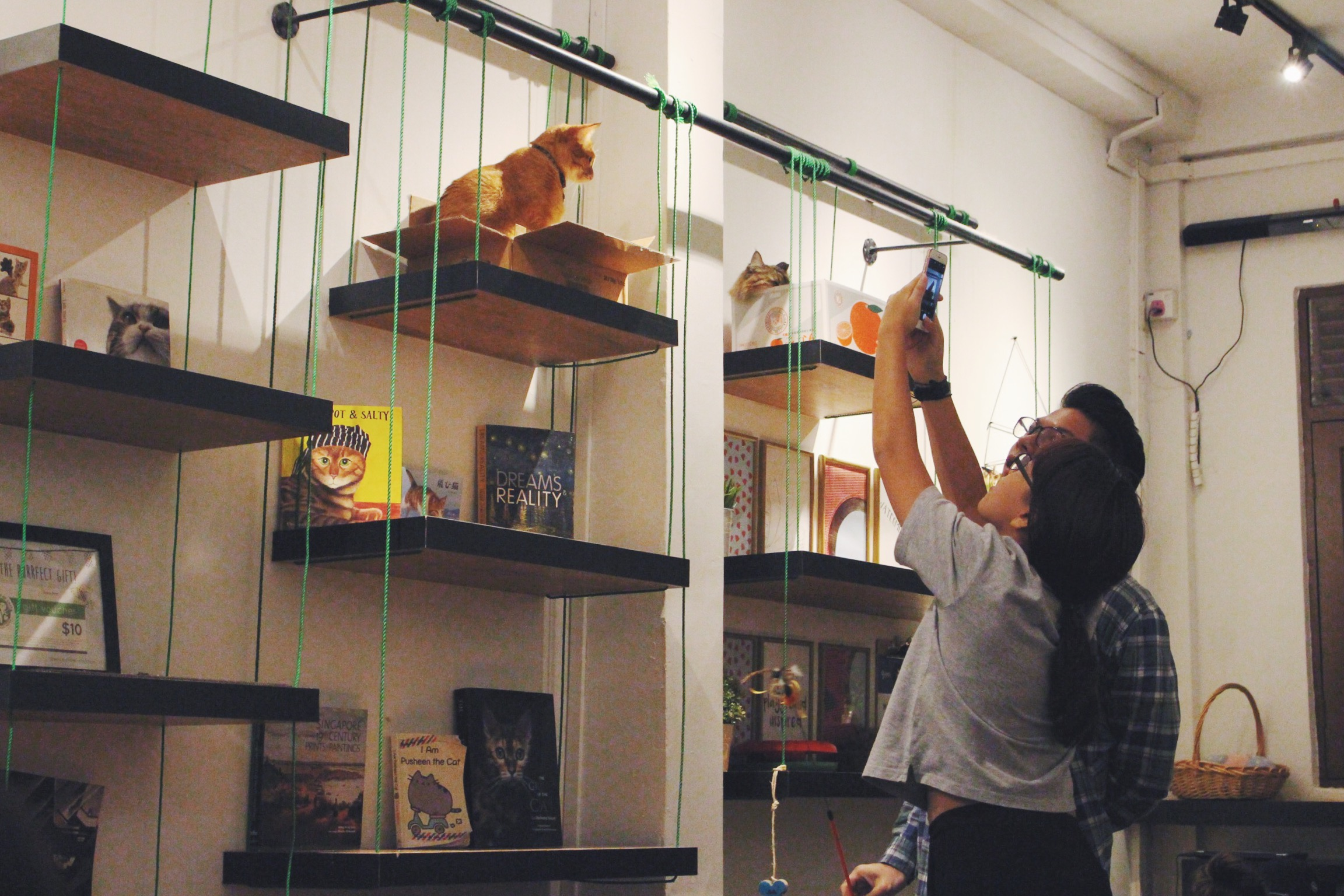 We all know how your photo galleries will look like after two hours at a cat cafe. Photo courtesy: Connected To India, overthemoosic