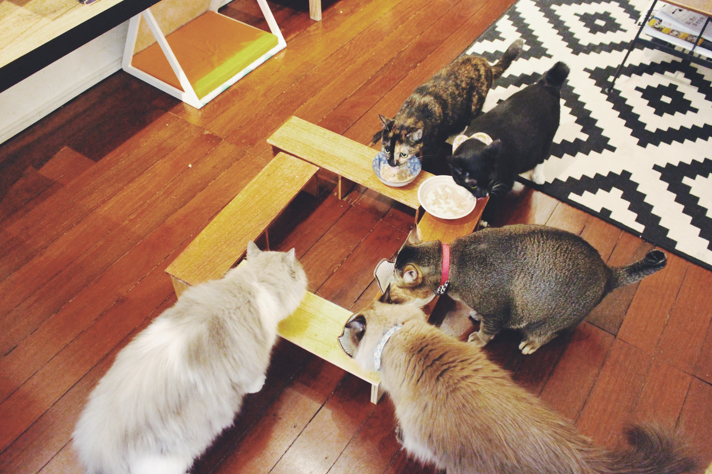 Feeding time. Photo courtesy: Connected To India, overthemoosic