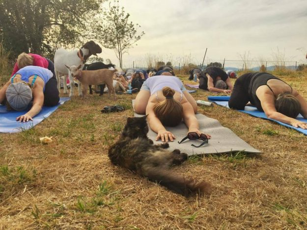 Goat Yoga at a farm in Oregon, USA. Photo courtesy: lonelyplanet