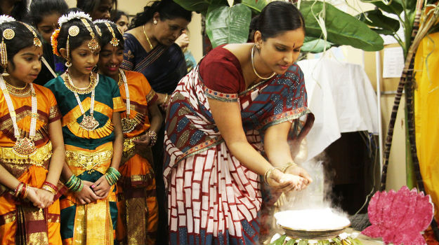 The 'pongal' dish, which is prepared as part of the festivities, is fed to the cattle and then they are taken to the village centres.