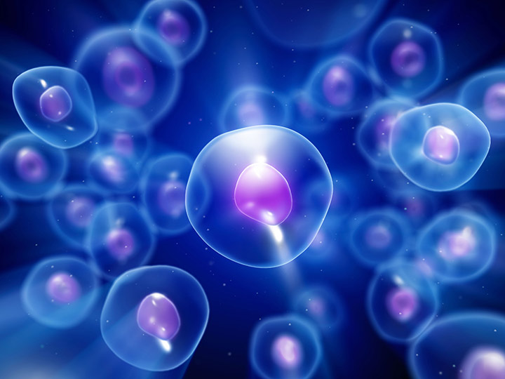 Scientists used induced pluripotent stem cells