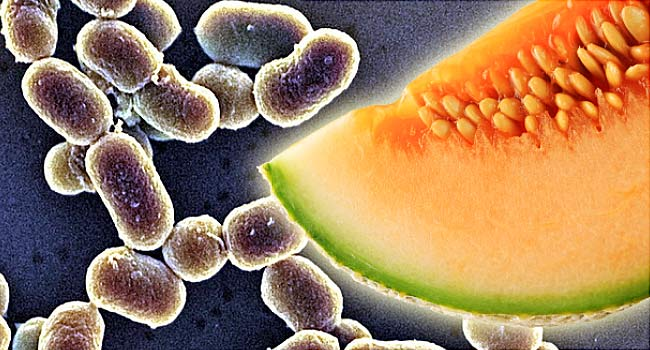 Rock melons contaminated with the listeriosis bacteria were exported from Australia to at least nine countries including Singapore