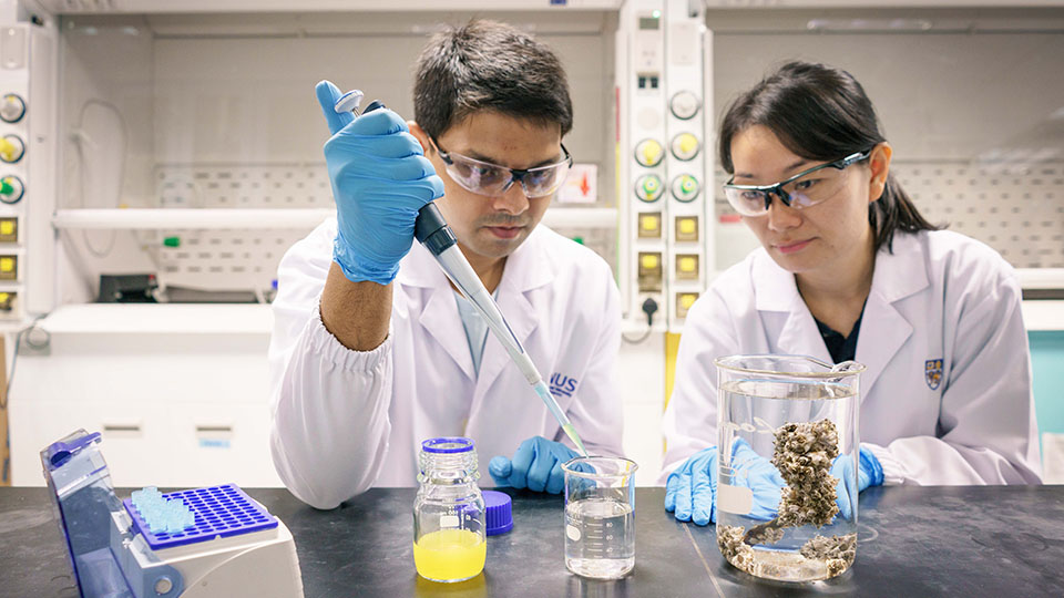 A research team from the National University of Singapore discovered that nanoplastics are easily ingested by barnacle larvae and they can accumulate in the bodies of the larvae over time. Mr Samarth Bhargava (left) and Ms Serina Lee (right) are members of the research team. Photo courtesy: NUS