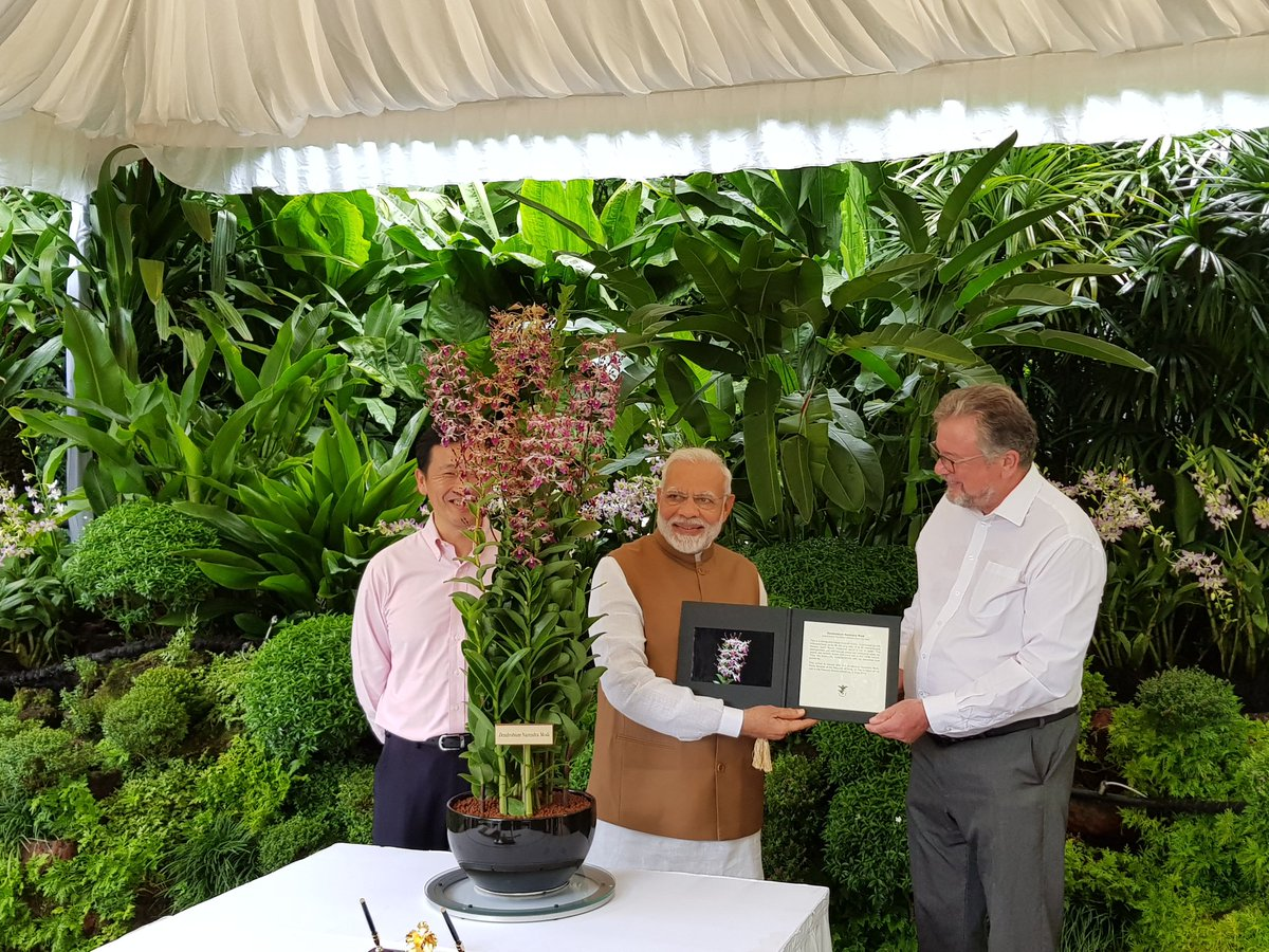 To mark the visit of Indian PM Modi to the National Orchid Garden, an orchid was named after him-Dendrobrium Narendra Modi. Photo courtesy: Twitter/@MEAIndia