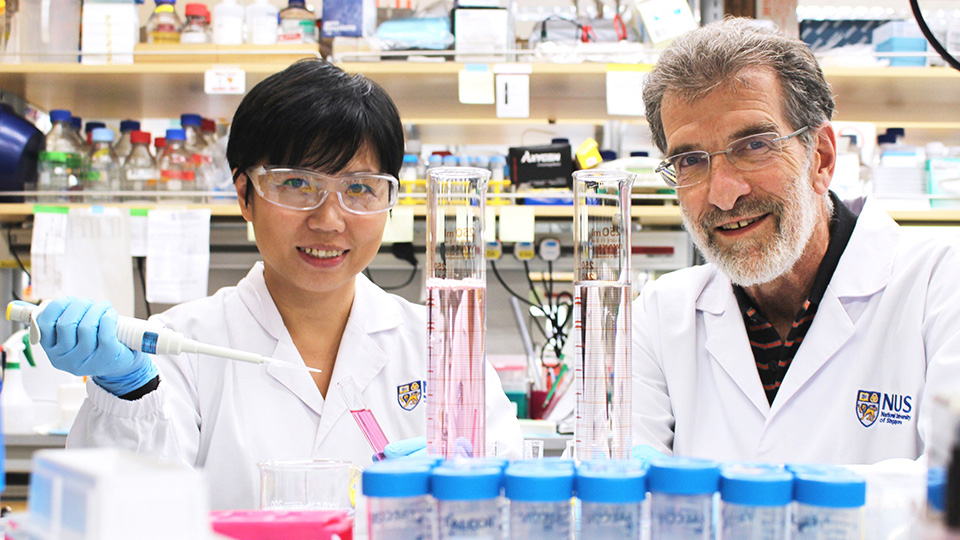 Professor Daniel Tenen (right) and Dr Liu Bee Hui (left), who are researchers from CSI Singapore. Photo courtesy: NUS