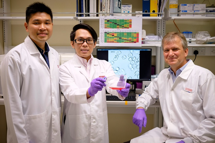 Scientists from a joint research team have found a potential treatment for severe malaria. Photo courtesy: NTU