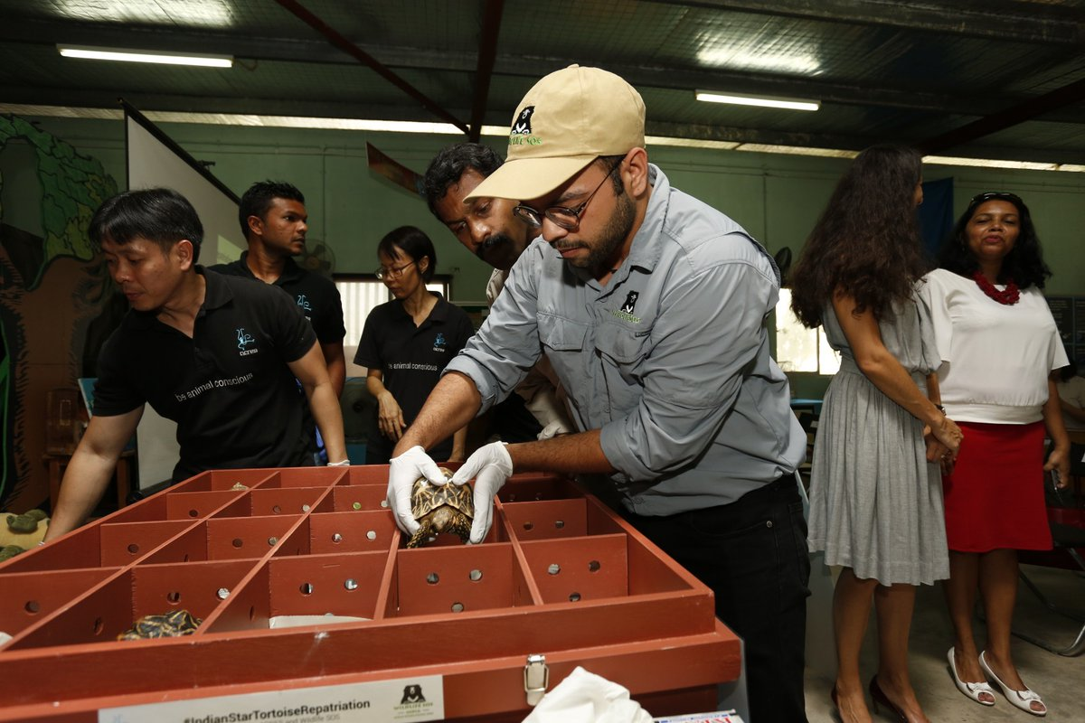 The tortoises were kept in specially designed boxes so that they did not face any problem in their long journey from Singapore to India. Photo courtesy: Twitter@/WildlifeSOS