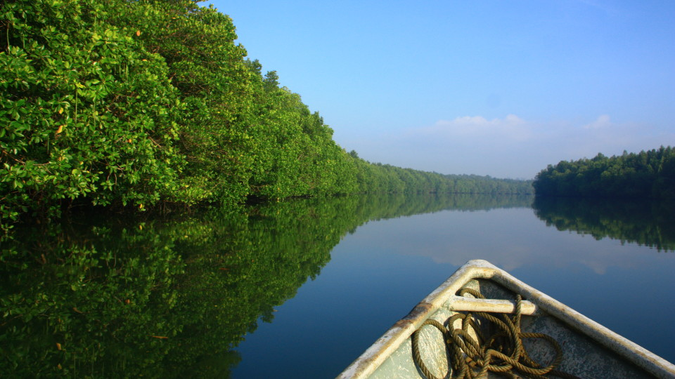 Linting Wetlands, a river ecosystem that is dominated by tidal mangrove forests, is situated at the south-east corner in the state of Johor, Malaysia. Photo courtesy: malaysia.wetlands.org