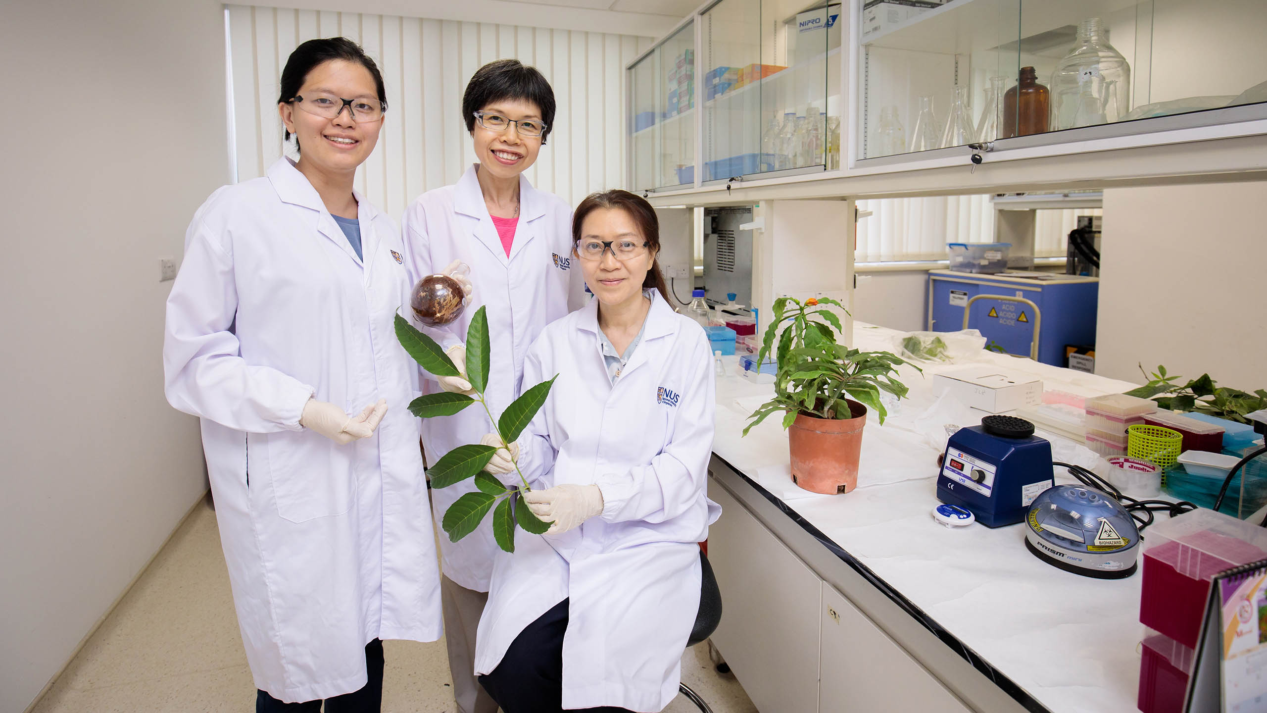 An NUS research team comprising Dr Siew Yin Yin (left), Dr Neo Soek Ying (centre) and Assoc Prof Koh Hwee Ling (right), uncovered anti-cancer properties in six tropical medical plants. Photo courtesy: NUS