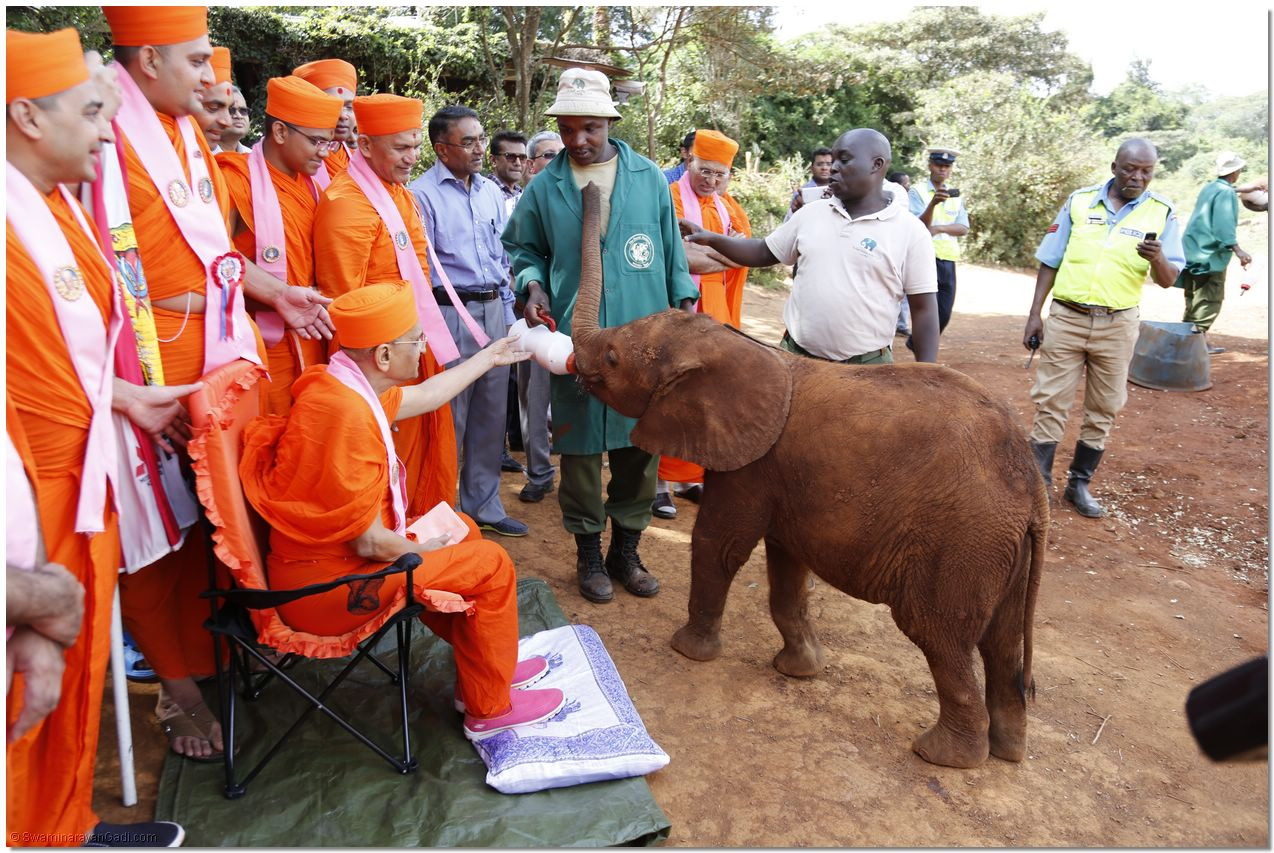 Indian Ngo To The Rescue Of Animals In Kenya S Wildlife