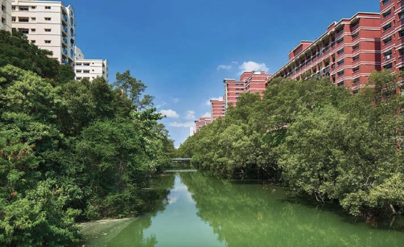 Mangrove trees lining Sungei Api Api, flanked by public housing flats, 2019. Photo courtesy: National Heritage Board.