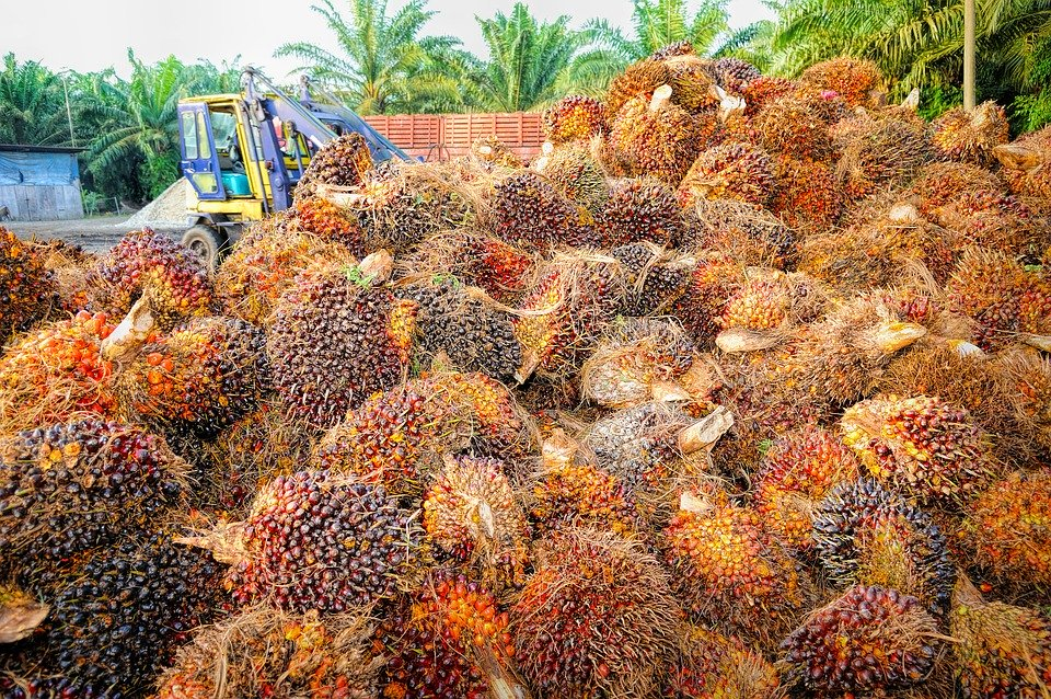 The Palm Oil Refiners Association of Malaysia (PORAM) said the ban meant Malaysia would now have to compete on crude palm sales to India