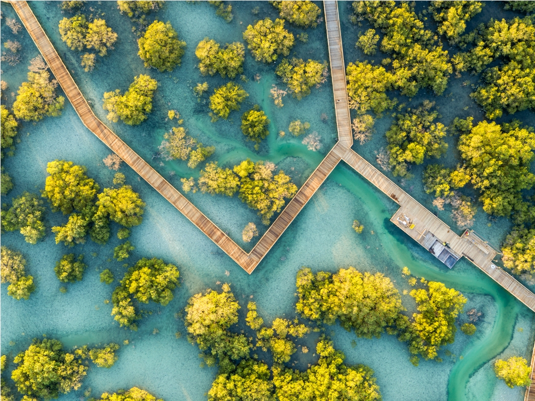 The Jubail Island Mangroves in Abu Dhabi. Photo courtesy: Department of Culture and Tourism - Abu Dhabi
