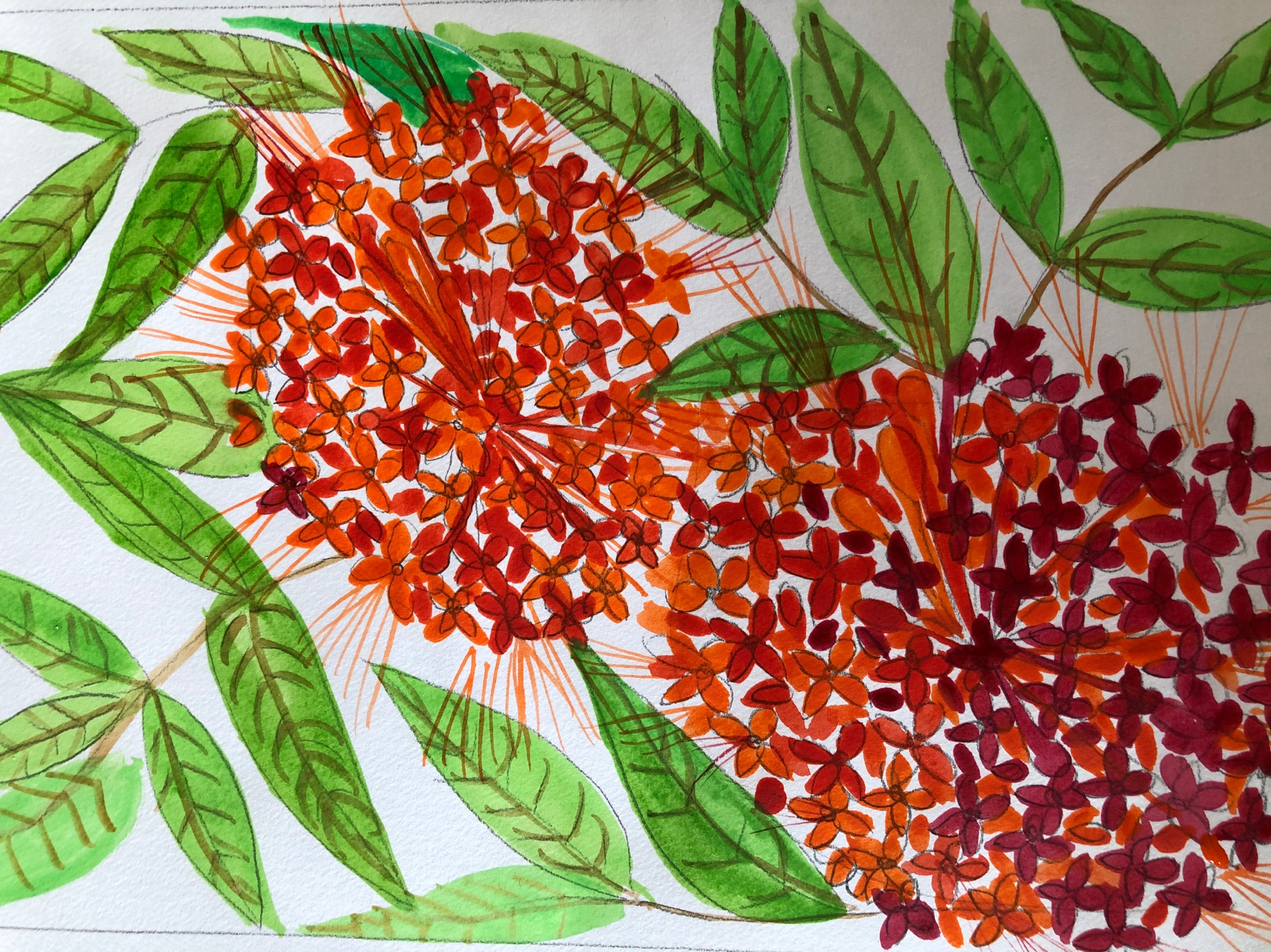 Explore the Ashoka flower watercolour painting workshop, open to all at IHC Culturefest 2020. Photo Courtesy: Stroke Arts