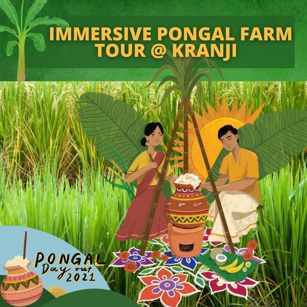 An immersive experience through Rites of Spring: Kranji Farm Tour as part of Indian Heritage Centre's Pongal 2021. Photo Courtesy: IHC/FB