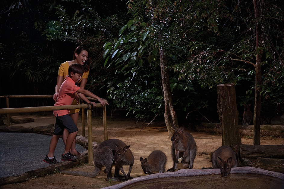 Singapore Adorable free-ranging wallabies at the Wallaby Trail at Singapore Zoo. Photo courtesy Singapore Zoological Gardens